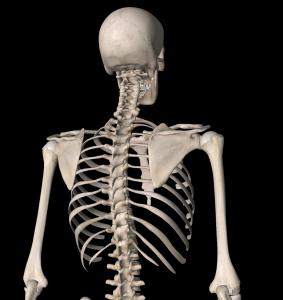 頸部・胸郭1